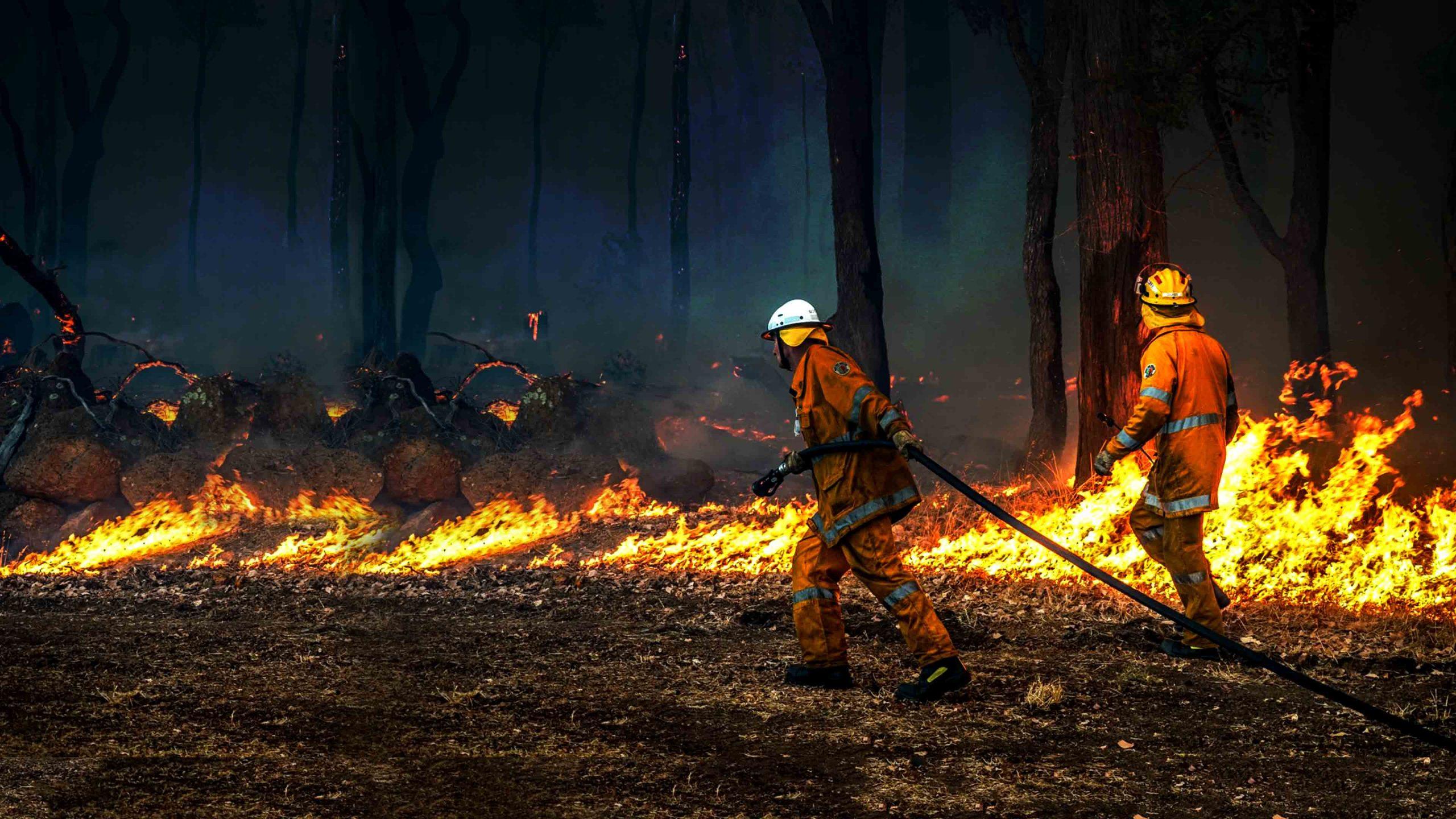 Bushfires Appeal